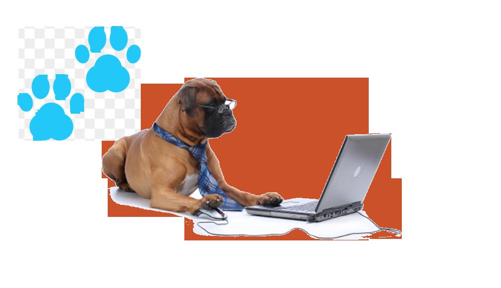feature 1 Software para Pet Shop